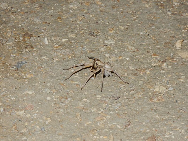 Spider at Darvaza