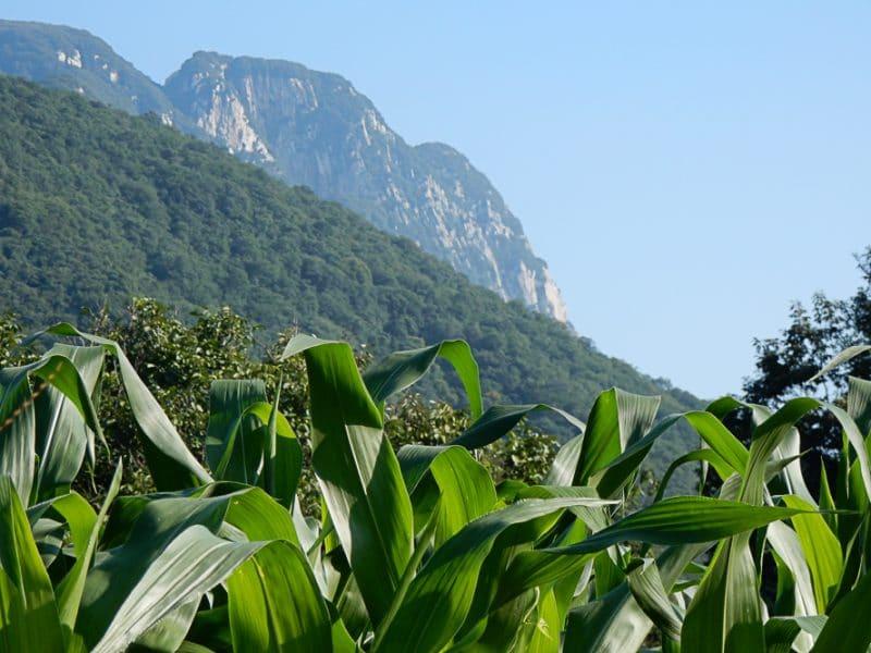 Song Mountain, Shaolin