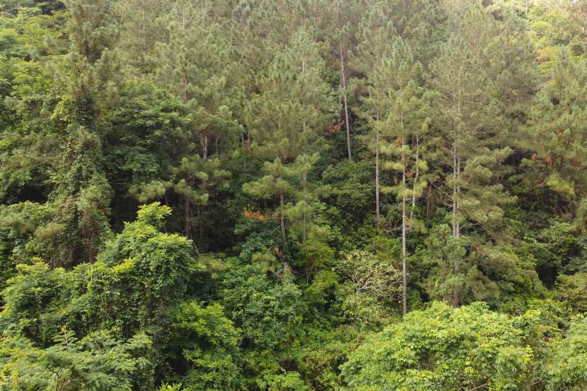 Rainforest Hainan Island