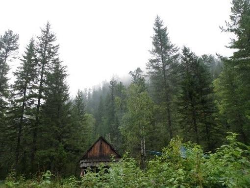 Siberian Wilderness