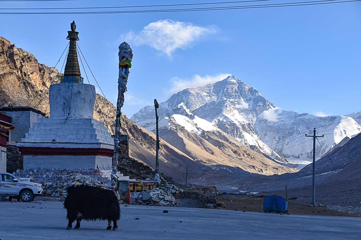 Rongbuk Monastery and Yak