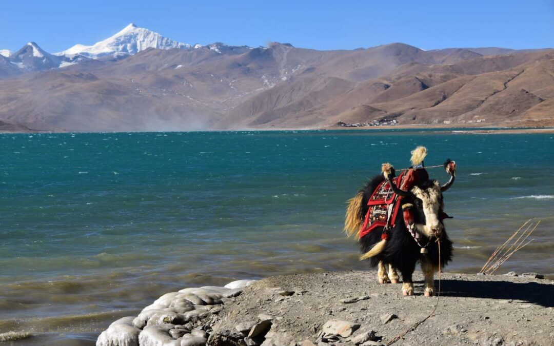Places to Visit in Tibet in 2021 – See the Roof of the World!